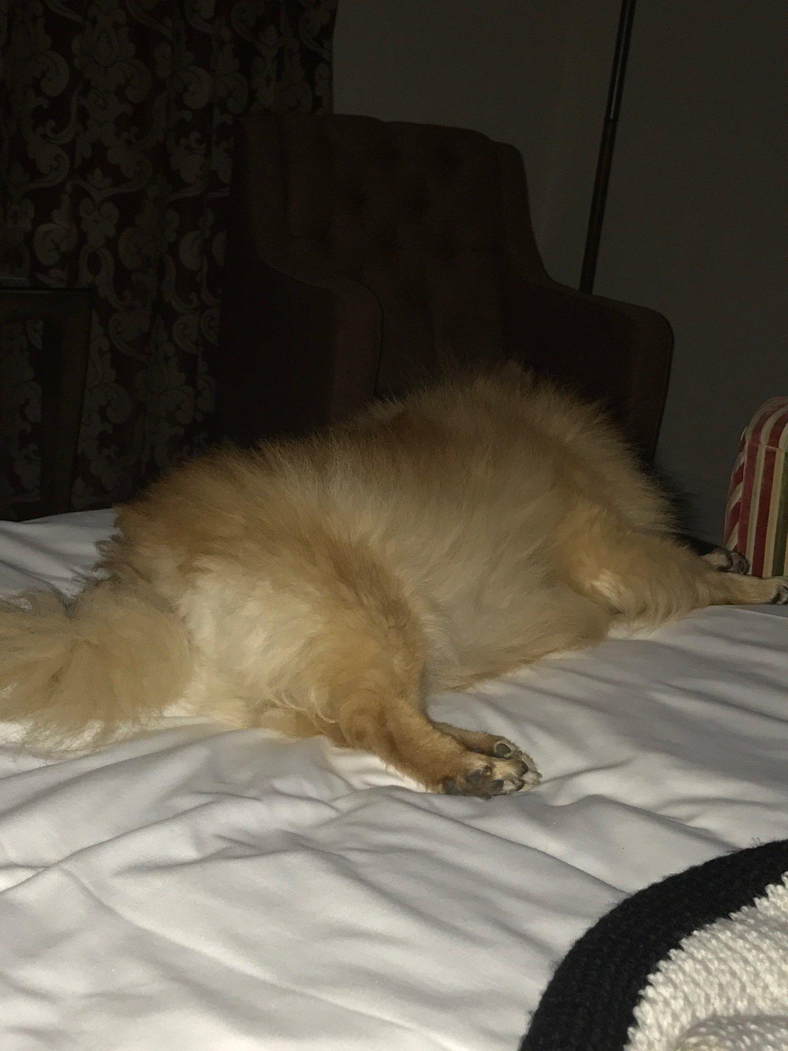 @5HfeatLittleMix He's flat out sleeping ���� https://t.co/3fE3Y4gw0e
