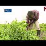 How technology can help with agriculture finance