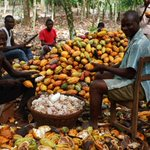 Ghana To Regain Cocoa Position