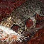 Cats kill 1 million birds a day in Australia