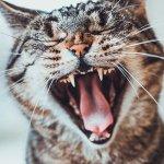 Cats kill one million birds a day in Australia