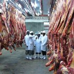 KMC increasing capacity to buy more livestock from farmers