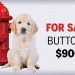 Online puppy-sale scams are surging