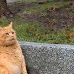 Cats in Australia kill over 1 million birds a day