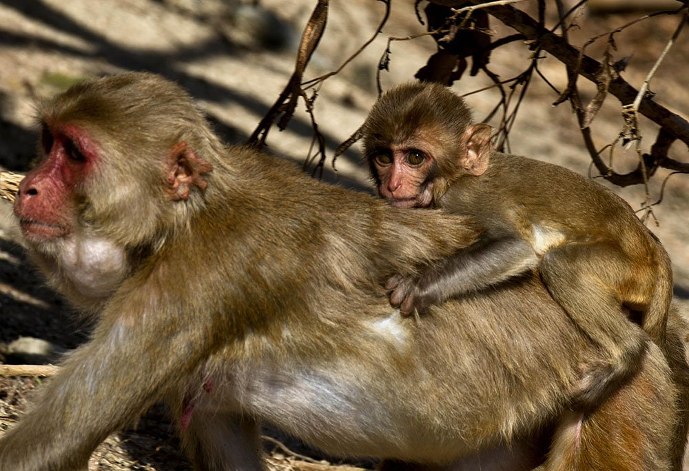 Scientists race to save Monkey Island research center