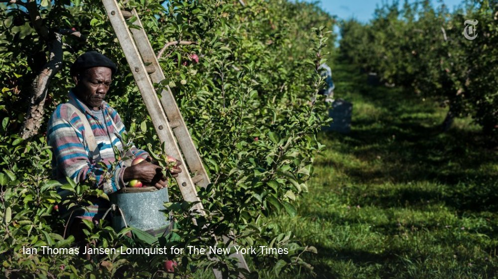 The Jamaican apple pickers of upstate New York https://t.co/rqFYN5Chbo https://t.co/ZrAAz6XHaM