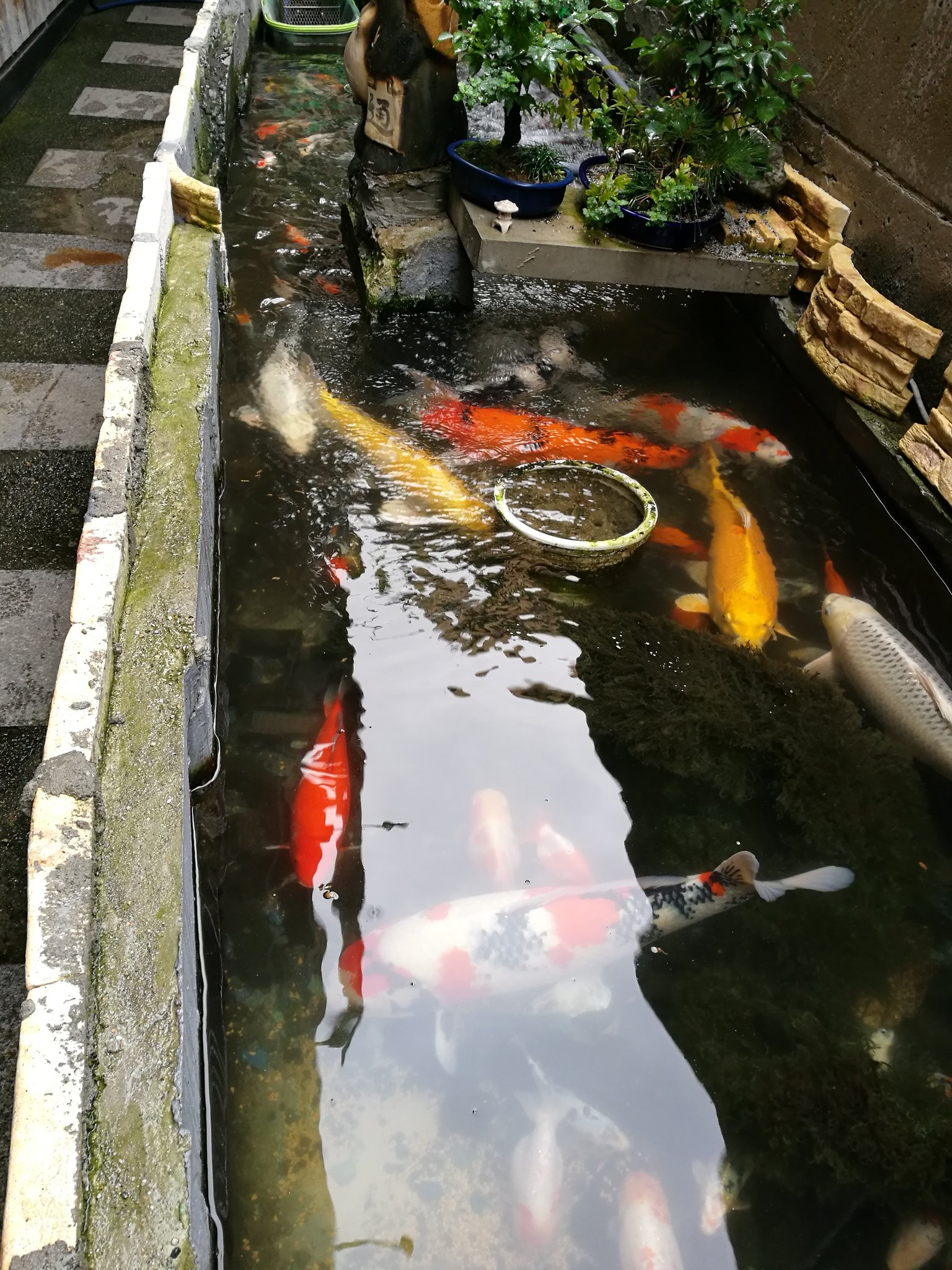 Fish in a lane. https://t.co/30v5uQz8ka