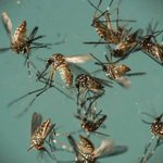 Final mosquito samples test negative for West Nile Virus, EEE
