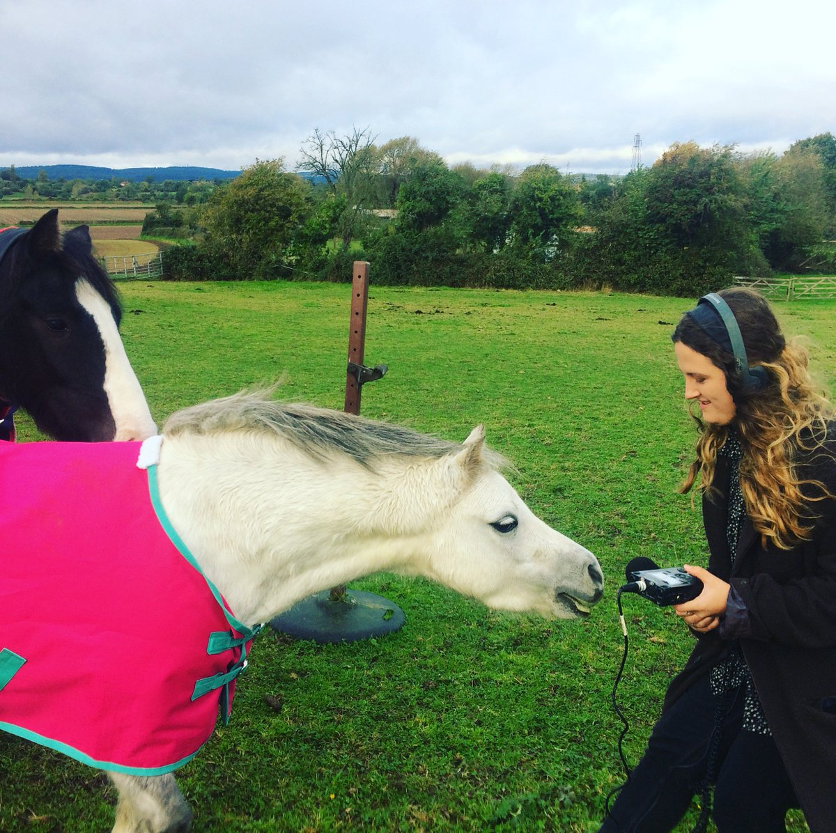Are apples safe for horses Horses love apples and they