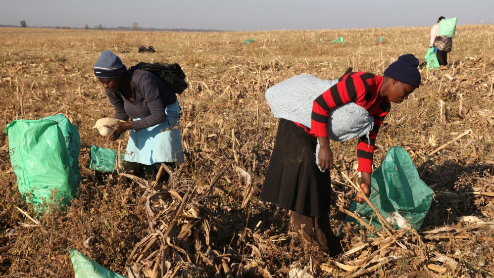 Opinion: Why agriculture is Africa's path to prosperity by @KofiAnnan