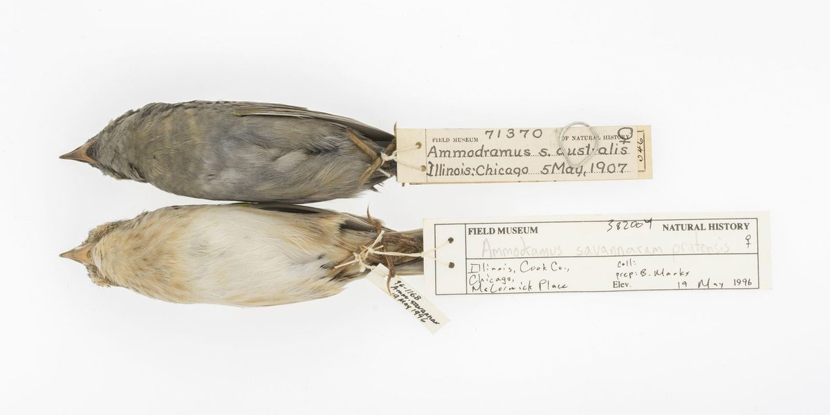 Dirty old birds shed light on global warming