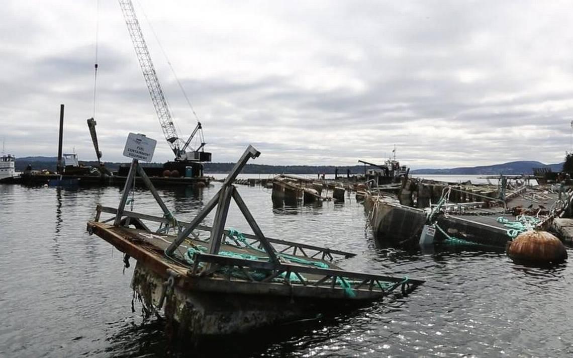 Fish farm has 60 days to fix net pens outside Seattle as 1 million Atlantic salmon move in