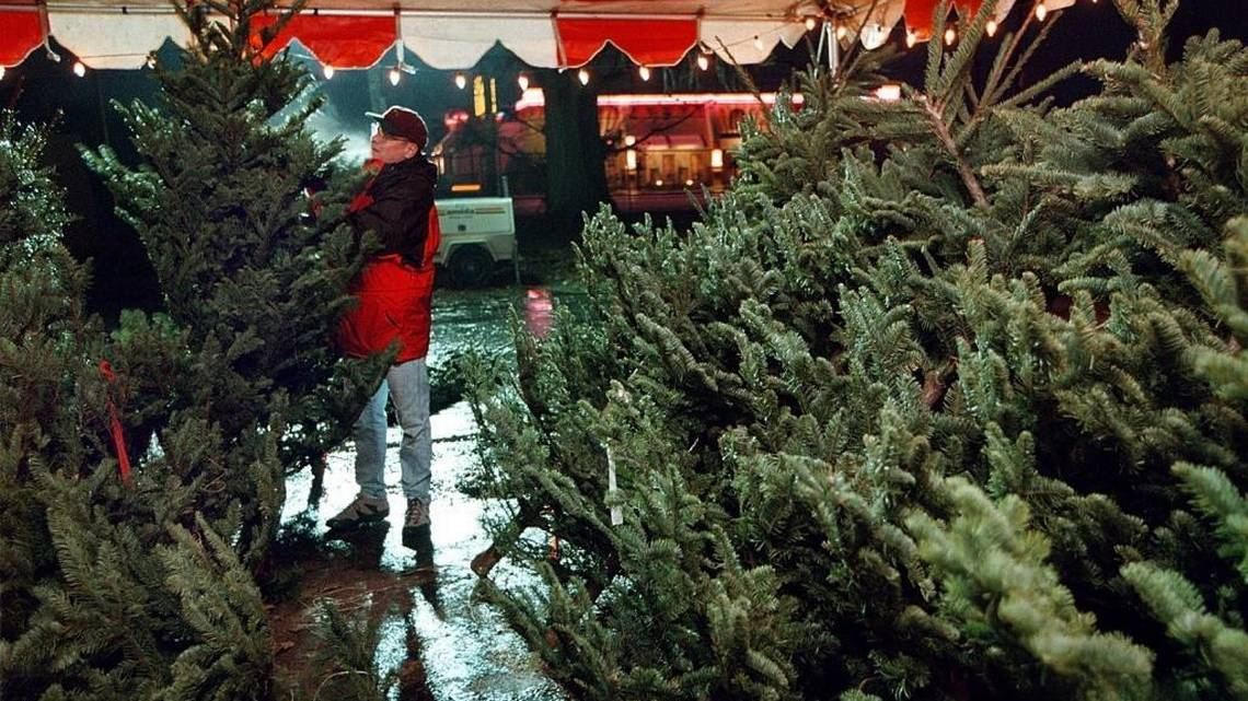 Buying a fresh Christmas tree in Boise? Supplies could be low | Idaho Statesman