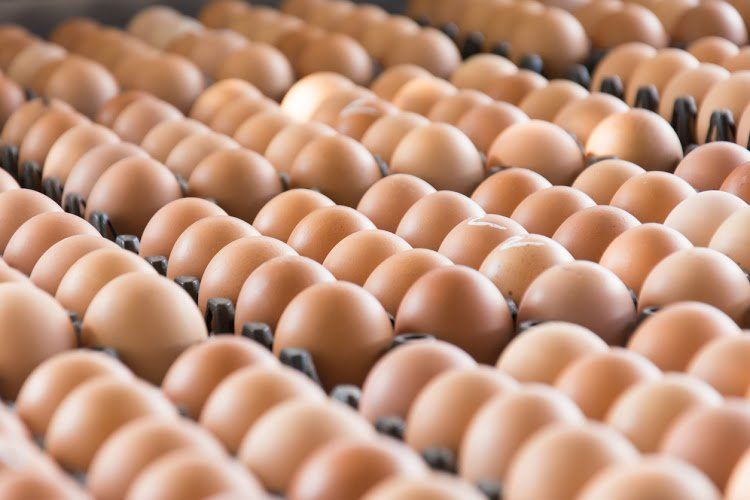 Japan scientists grow drugs in chicken eggs