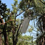 Two people dead after light plane crash in Northern Territory bushland