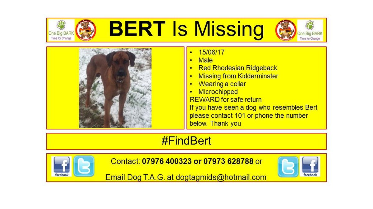 RT @DogTAGMids: #FindBert #lostdogalert WHERE ARE YOU? #scanme Rhodesian Ridgeback https://t.co/b7AagYknmz