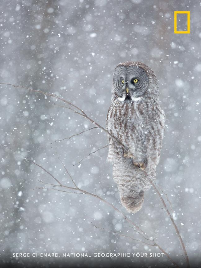 Top Shot: Watchful Owl https://t.co/P6LkJVaS07 #YourShot https://t.co/59pQhlempg