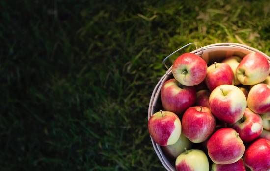 Making the most of apple season