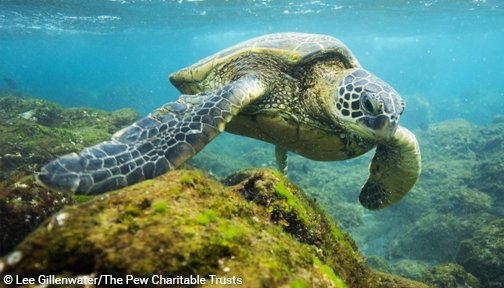 Happy #TurtleTuesday https://t.co/3aqDpxSnu6