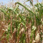 TMA urges farmers to seek guidance from agro-experts