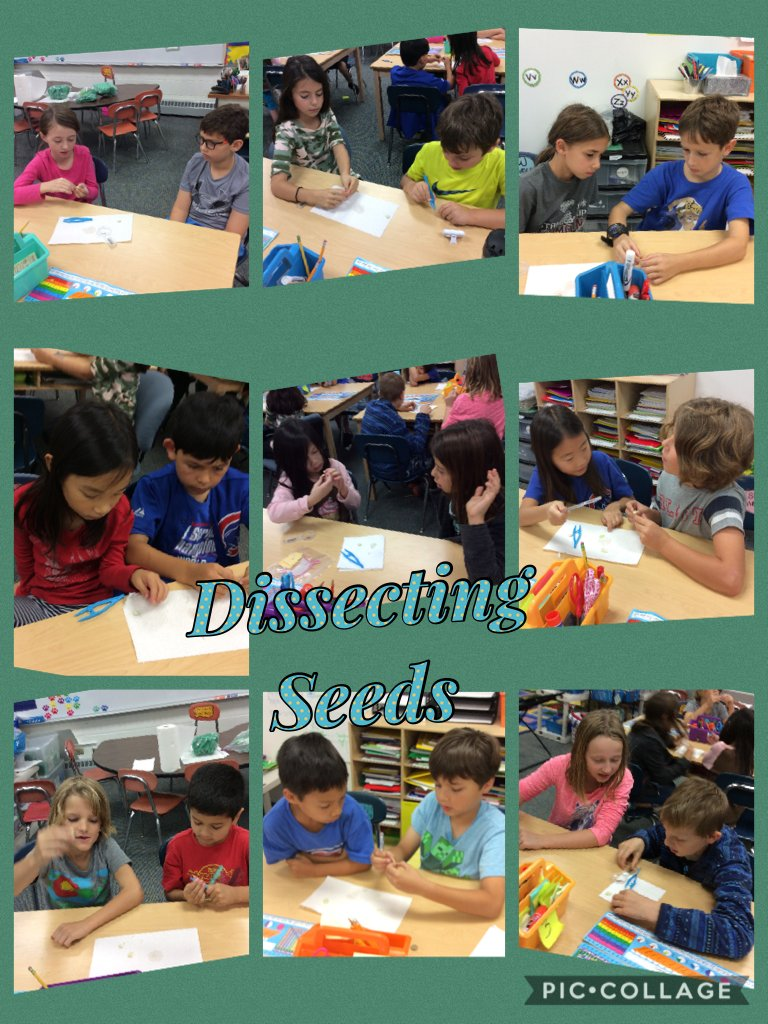 test Twitter Media - Learning about seed structure by dissecting. #d30learns #wbplays https://t.co/Ja3UitJLfK https://t.co/CqX14VQpy0