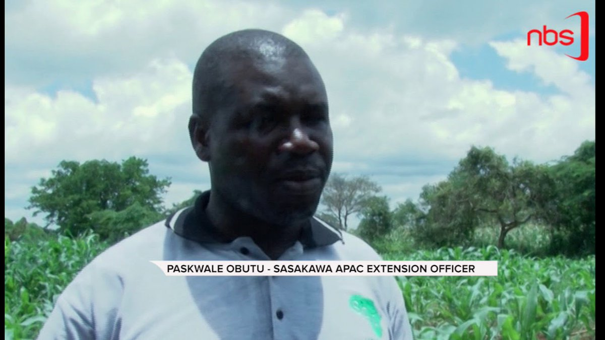 Apac Farmers Reaping Big from Collective Farming