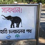 Elephant Tramples Rohingya Refugees in Bangladesh, Killing Four