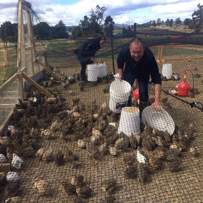 Boutique abattoir the answer for former chef turned quail farmer Brendan Sheldrick