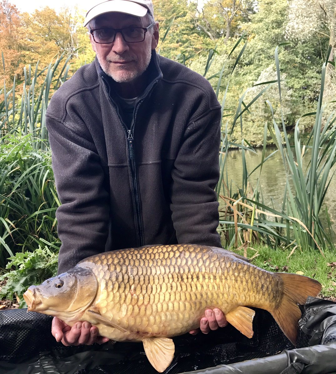 A stunning Autumnal <b>20lb</b>s+ common from Jenkins Lake @StickyOfficial #Manila #carpfishing #aut