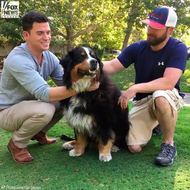Family dog emerges alive and well from California wildfires