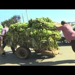 How hand cart pullers contribute to the economy