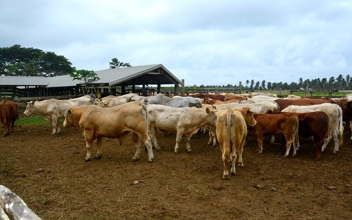 First Pacific Week of Agriculture starts in Vanuatu