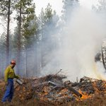 Deschutes Collaborative Forest Project shows targeted thinning, burns can save homes