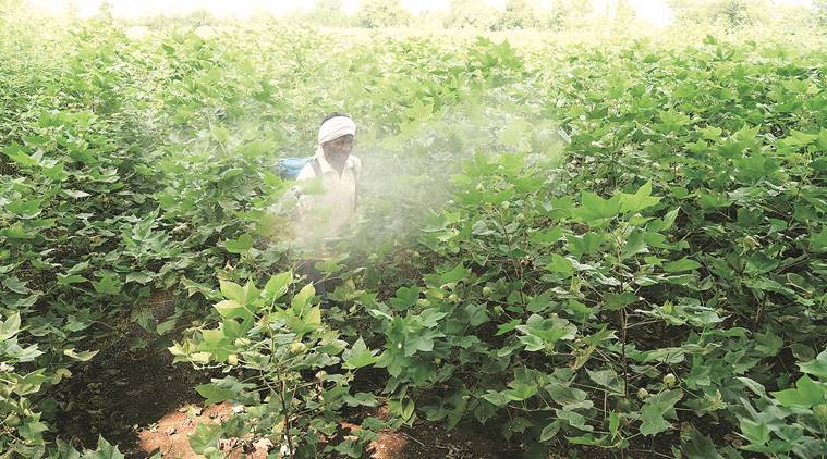 Seven farmers in Solapur hospitalised after sprayingchemicals