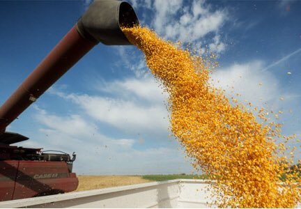 Over 50% of grain traded around the world is used for animal feed or biofuels. https://t.co/OFas7rBIWv
