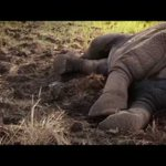 'Poaching Still a Challenge to Conservation'