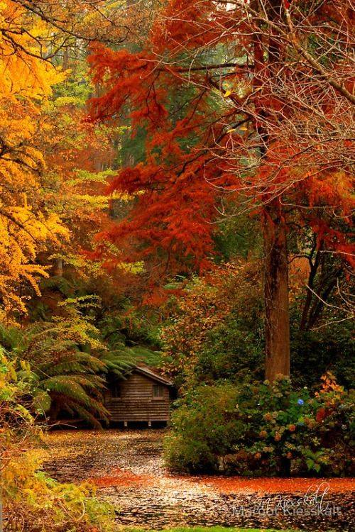 test Twitter Media - Looking for a Fall escape? Here's a cabin in the woods, just perfect for witnessing the passing of the #seasons.  #ellenrothauthor https://t.co/ryHrMji7qi