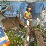 Large tree falls onto Beaufort home, injuring man