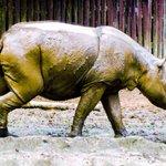 Malaysia, Indonesia to discuss Sumatran rhino conservation