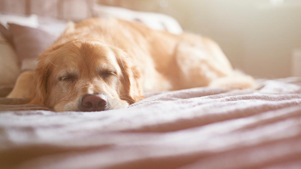 test Twitter Media - Esto es lo que ocurre en el cerebro de tu perro mientras duerme. https://t.co/71IKgeYjwP Vía: @LaVanguardia https://t.co/sJKlf3KxEf