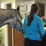 Ontario horse 'checks in' at pet-friendly Kentucky motel