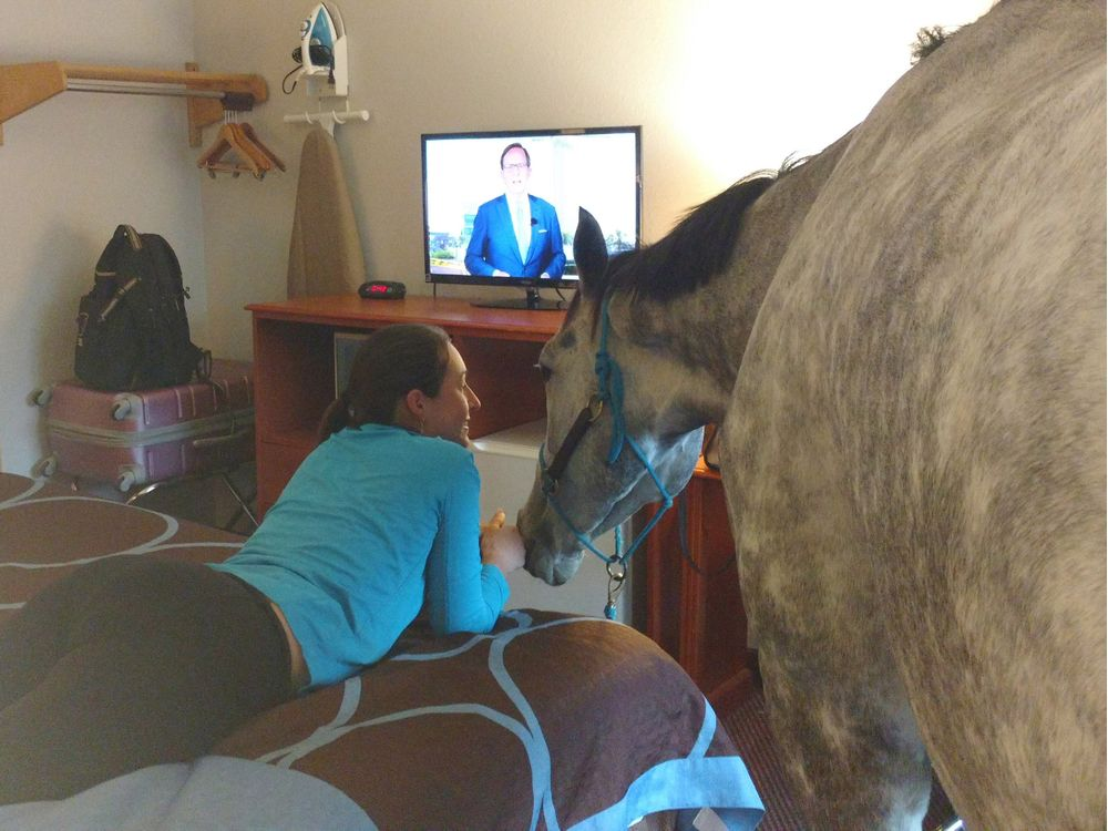 While you were sleeping: Was there a horse in the room next to you?