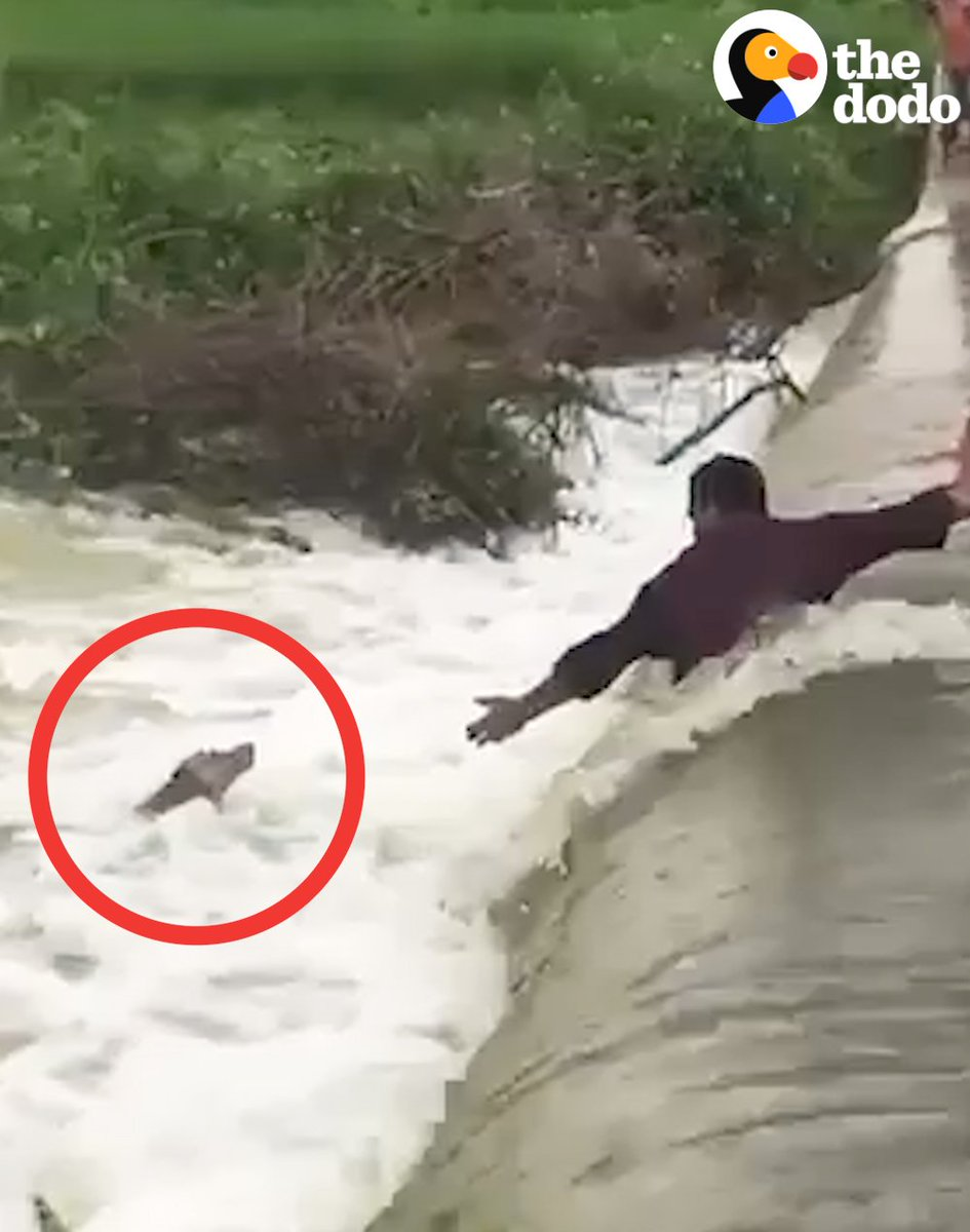 RT @dodo: This is the most nerve-racking dog rescue! (via @Paul_Oommen) https://t.co/BFLXu92bfv