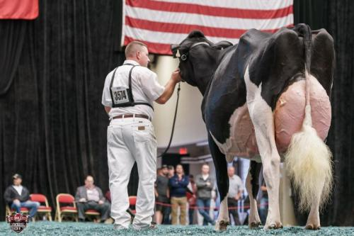 Vermont farm wins top prize for Blexy