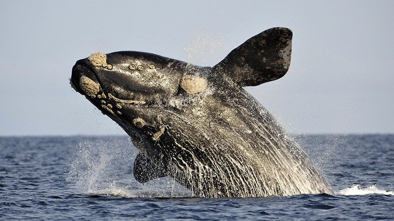 Dr Doolittle effect: Dolphins & whales form human-like societies, study says