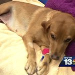 Dog hit by car in Mountain Brook, community pitches in to save her