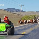 The most Colorado thing: A modern cattle drive