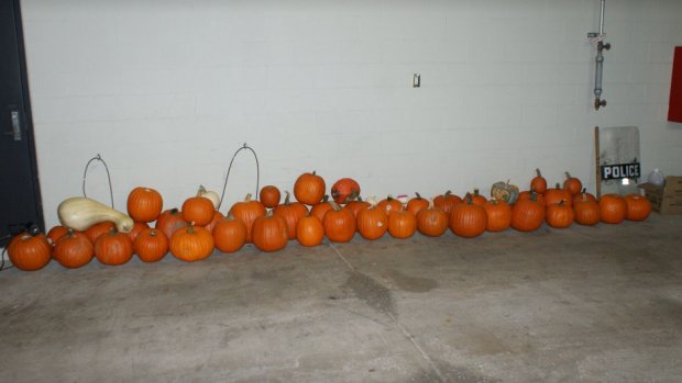 Police post 'pumpkin lineup' after recovering stolen squash