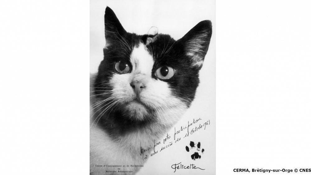 Félicette, the astrocat who made
