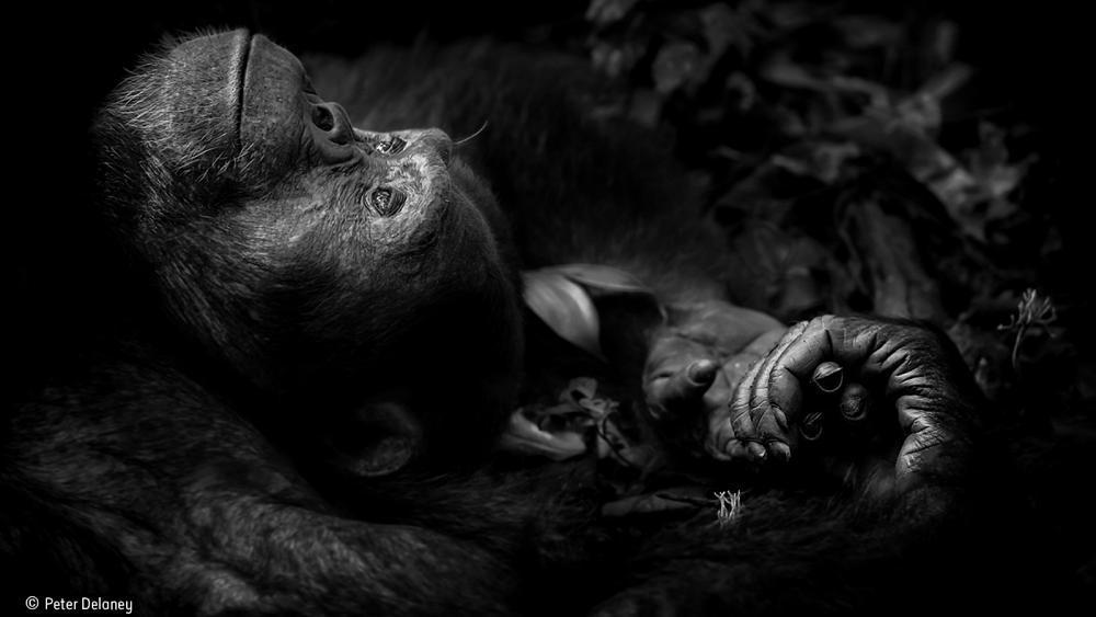 Wildlife Photographer of the Year 2017 : et les gagnants sont...